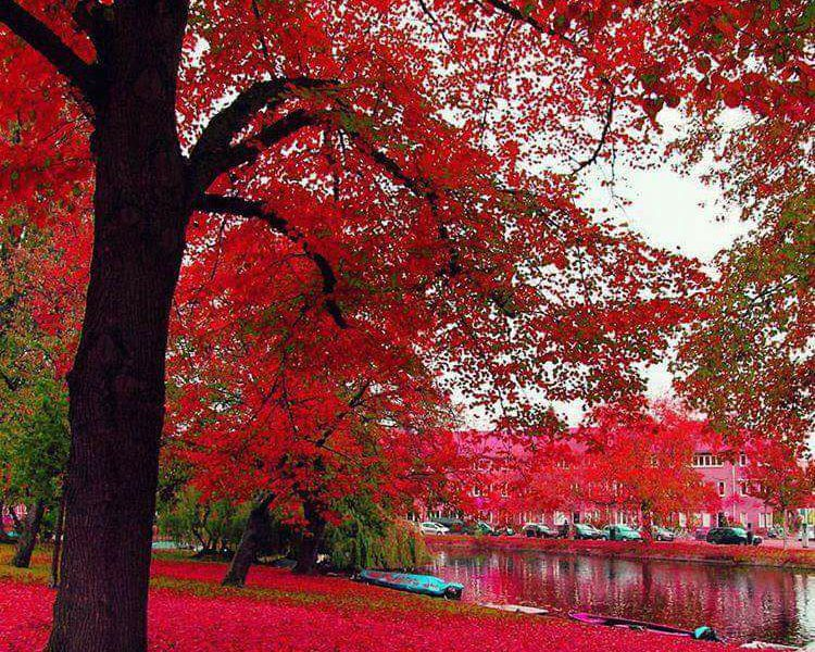 Amsterdam – Holandia2