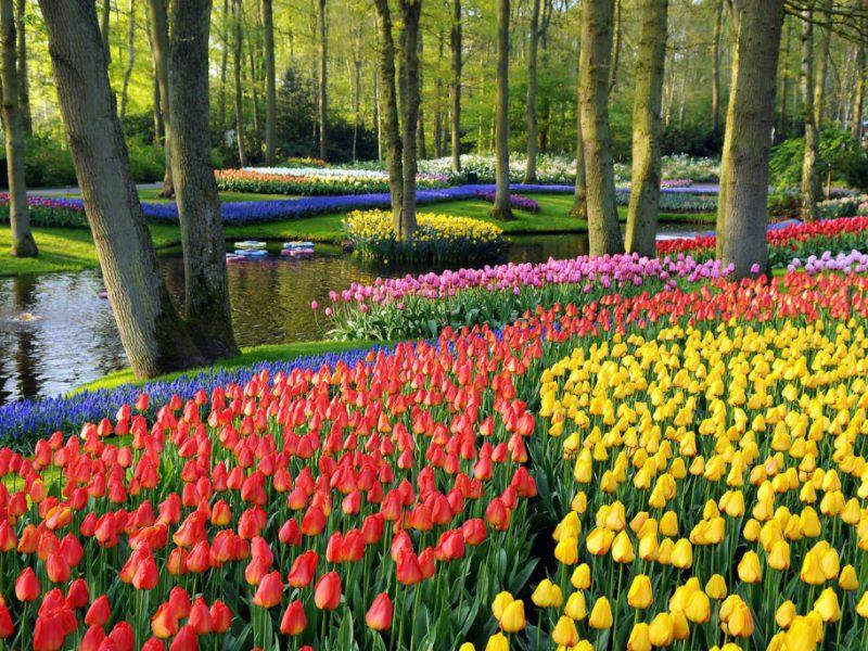 Keukenhoff – Holandia