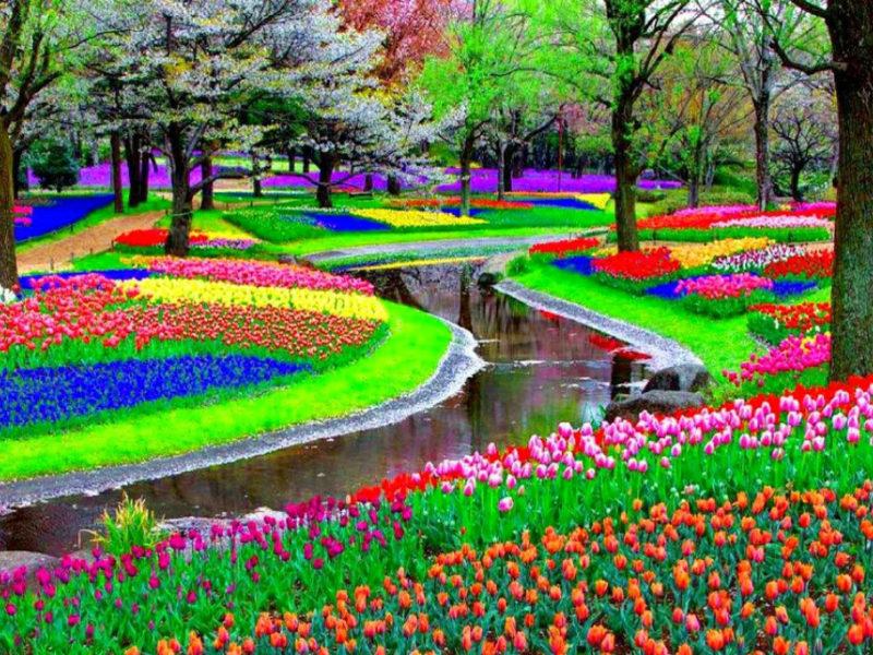 Holandia 1
