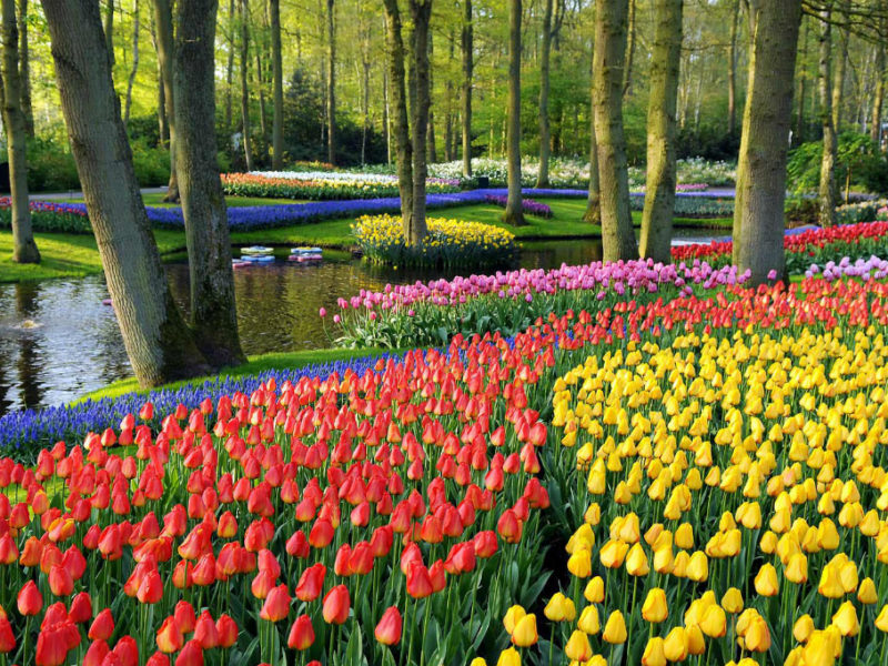 Holandia 2