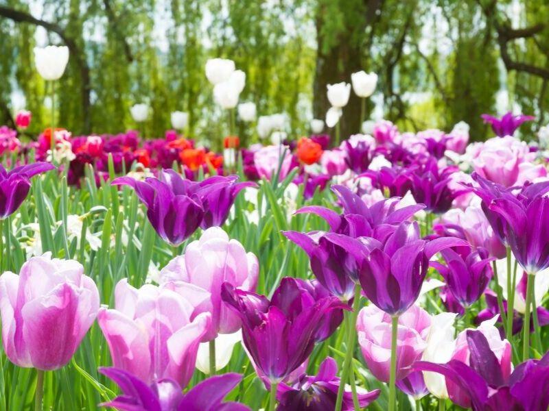 Szwajcaria z Wyspą Kwiatów Mainau 4