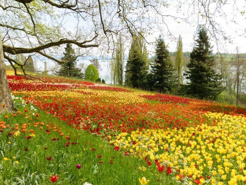 Szwajcaria z Wyspą Kwiatów Mainau 6